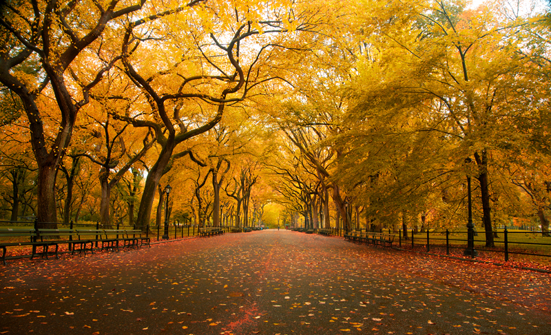 new-york-city-fall